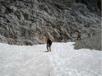 Between snow and rock