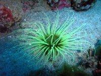 tentacoli verdi