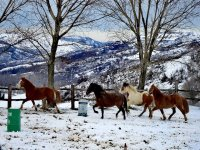Correre liberi nella neve