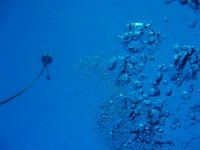 thousand blue bubbles