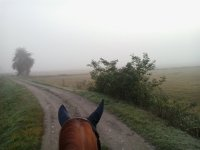 La nebbia non ci ferma