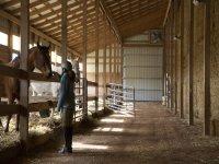 Curiamo i nostri cavalli