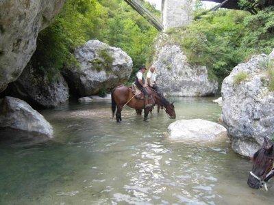 Scuderia Castello Passeggiate a Cavallo