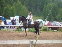 I nostri fantastici stalloni