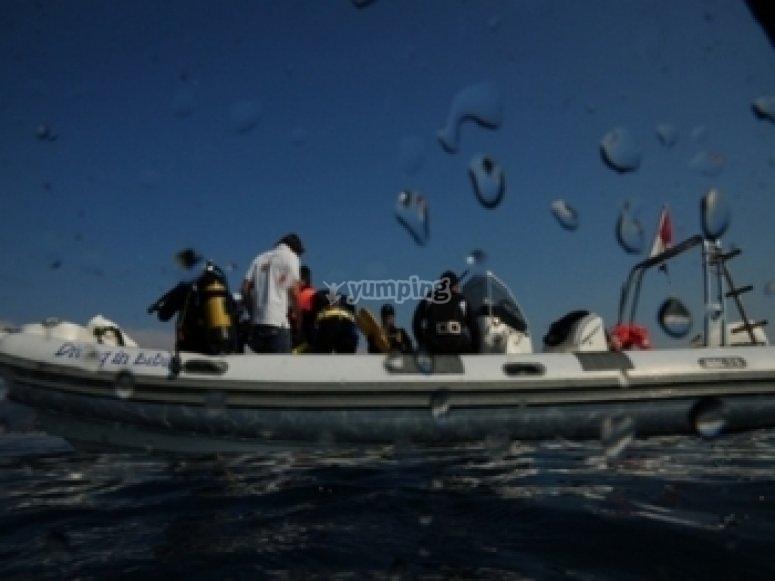 Immersioni dalla barca