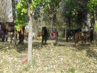 i cavalli nel maneggio