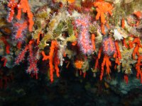 Spettacolo sottomarino