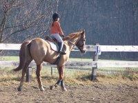 Lezioni equitazione
