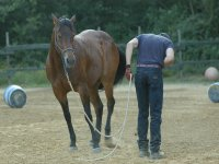 Prendere confidenza con il cavallo