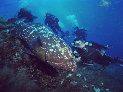 Introductory 2h diving course for everyone on Elba
