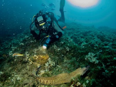 2 day dives in the Pianosa Islands