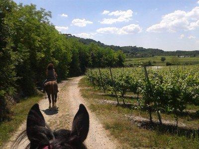 Una giornata intera a cavallo per tutti a Uzzano