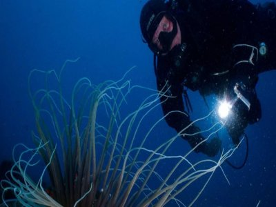 Guided dive with patent, Acitrezza