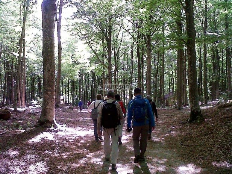escursioni in gruppo