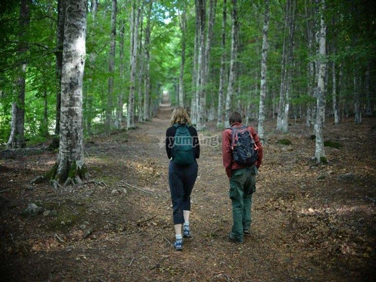 trekking tra i boschi