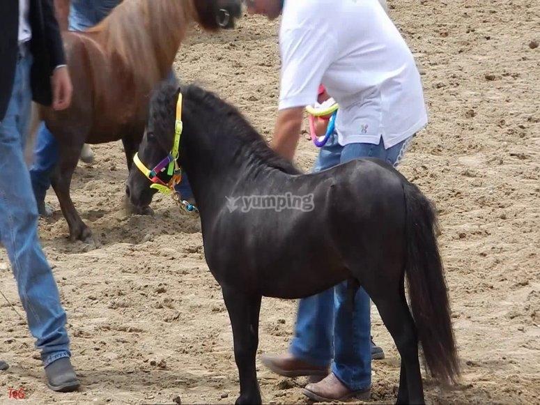 conosci i piccoli pony