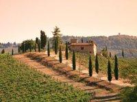Il Chianti e i suoi vini