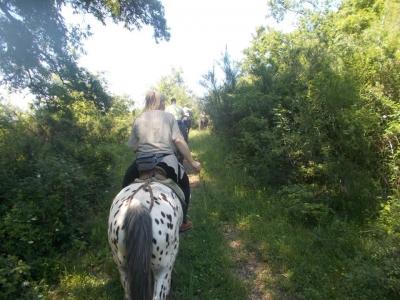 Passeggiata a cavallo a Bassano Romano (1,5h)