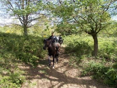 Passeggiata a cavallo a Bassano Romano (3h)