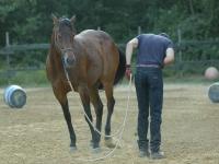 Prendere confidena con il cavallo