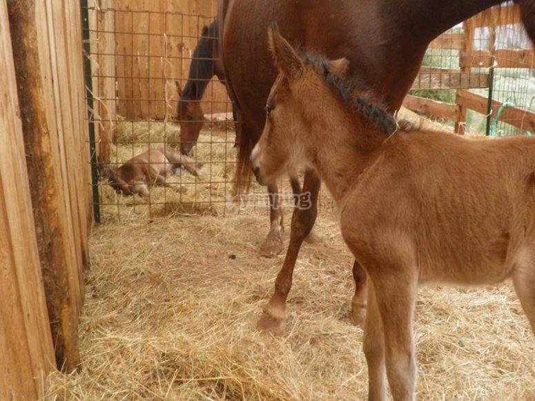 I nostri piccoli cavalli