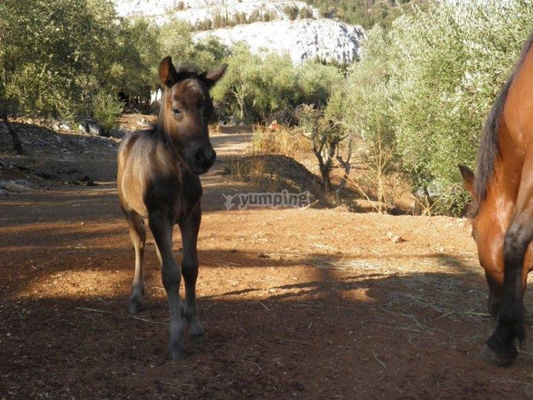 I nostri cavallini
