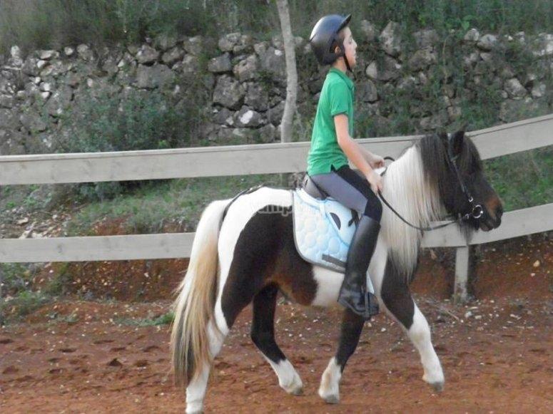 Sul pony