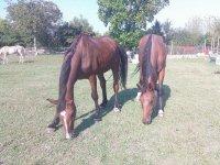nel nostro ranch