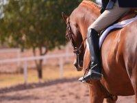 Lasciati innamorare dall'arte equestre