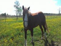 nostri cavalli a riposo