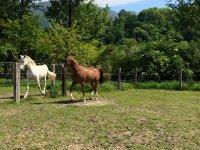 i nostri cavalli sono liberi in natura