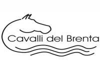 Cavalli del Brenta