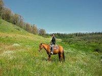 Lezione di equitazione ad Enna di 1 ora