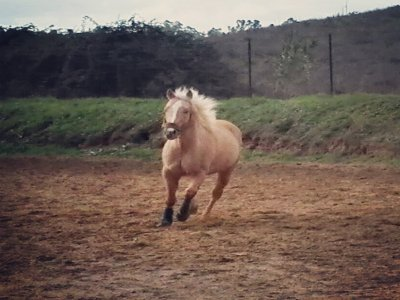 Passeggiata a cavallo (1 ora) , Enna