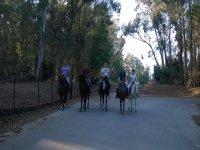 Passeggiata a cavallo a Enna di 1 ora
