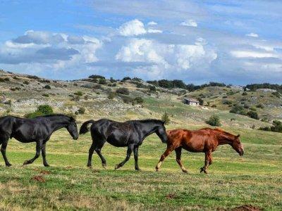 asd Sofia's Ranch