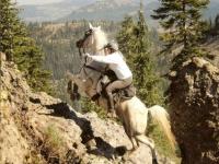 Passeggiata a cavallo (1 ora) , Follonica