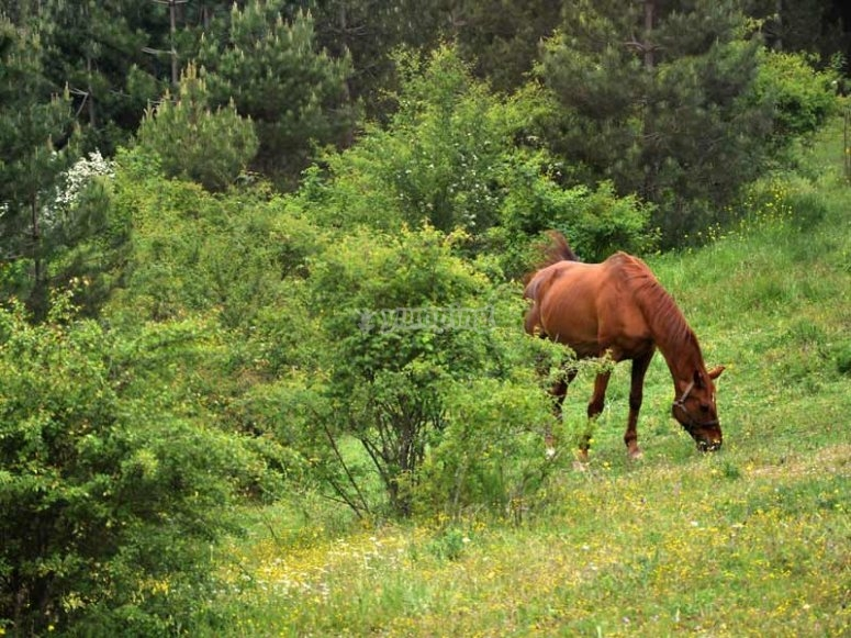 One of our horses resting after a walk