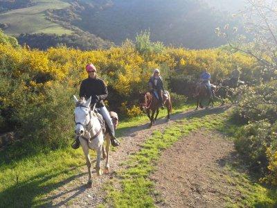 Passeggiata a cavallo(3ore) Zurrica/Sant'Anastasia