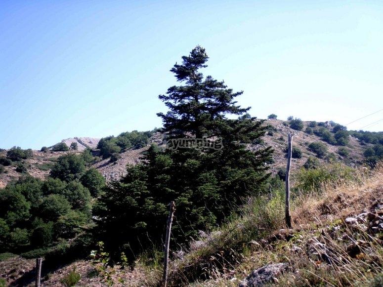 Gi alberi in via d estinzione