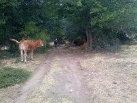 Walking alongside the animals