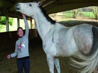 Che meravigliosi cavalli