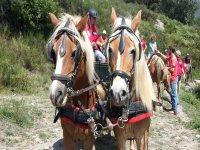 alcuni dei nostri bellissimi cavalli