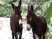 Al fresco, sotto la neve
