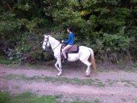 Passeggiata a cavallo (2 ore) , Manziana