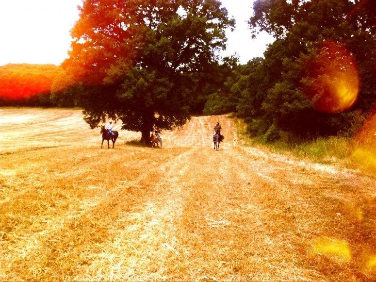 Regalati un trekking a cavallo
