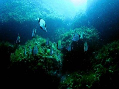 Immersione sub area protetta(50min),Portofino