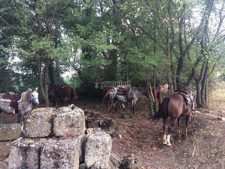 i nostri cavalli si riposano prima di ripartire