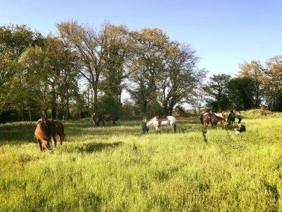 Passeggiata a cavallo a Formello di 2 ore