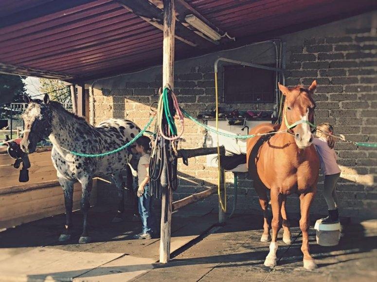 Vieni a conoscere i nostri equini!